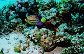 Underwater life of coral reef: Red sea poster
