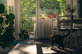 Home Decor Interior With Cat. Home Decor. Home Interior With Cat. Beautiful Home Interior Decorate W
