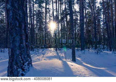 The Sun Is Setting Behind The Trees. Sunset In The Winter Forest. The Sun's Rays Make Their Way Thro