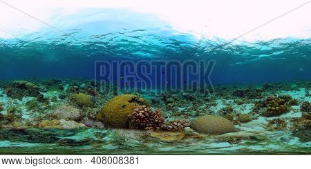 Soft And Hard Corals. Underwater Fish Garden Reef. Reef Coral Scene. Philippines. Virtual Reality 36