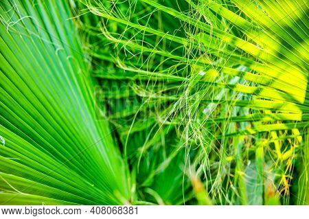 Tropical Nature Abstract Background With Palm Tree Leafs Lit By The Sun From The Back