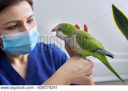 Doctor Woman Veterinarian Examining A Green Quaker Parrot. Pet Bird On Examination At The Vet Clinic
