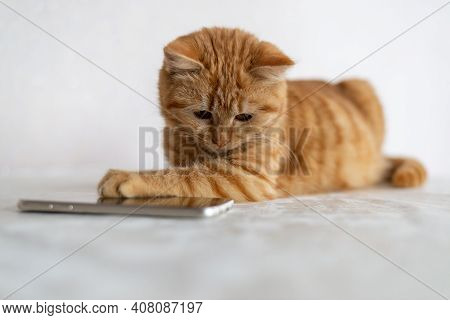 Ginger Kitten Lies Next To The Cell Phone