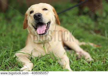 Amazing Pictures Of Small Dogs In The Evening Sitting On The Grass
