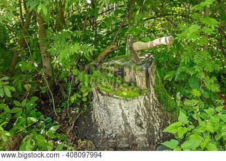 Ax In The Stump. The Ax Is Stuck In An Old Birch Stump In The Forest.