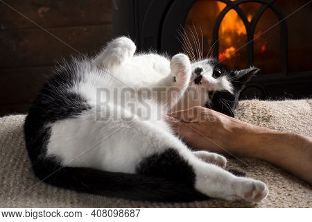 Domestic Cat Lie In Front Of A Wood Stove ,human Hand Caressing A Cat.