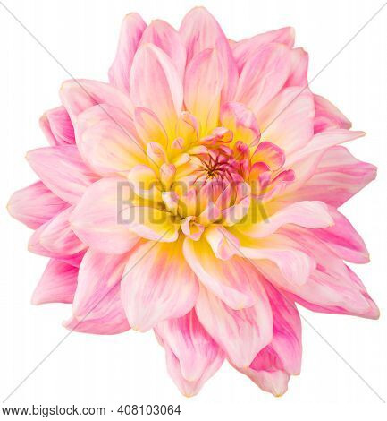 Pale Pink Dahlia Flower, Inflorescence On Isolated White Background