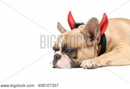 French Bulldog Wearing A Devil Horn Shaped Headband, Lying Bored And Tired Isolated On White Backgro