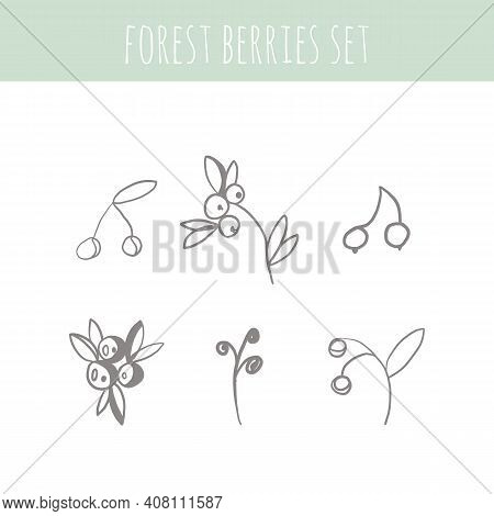 Forest Berries And Herbal Set. Graphic Collection With Fantasy Field Herbs. Hand Drawn Elements. Bot