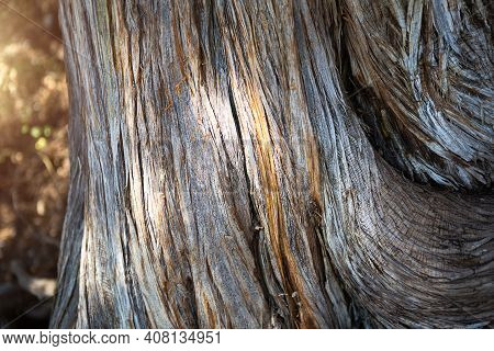 The Texture Of A Dry Juniper Tree Trunk. Curved Trunk With Fibers And Layers. Ecology, Natural Backg