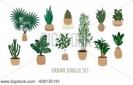 Urban Jungle Plants Set. Houseplants In Trendy Wicker Jute Baskets. Indoor Big Floor Plants In Handm