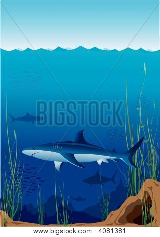 Beautiful and dangerous underwater world with sharks poster