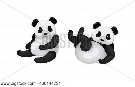 Giant Panda Or Panda Bear With Black Patches Around Its Eyes And Ears In Sitting And Lying Pose Vect