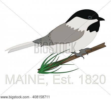 Chickadee Perched on Pine Tree Branch Celebrating State of Maine Anniversary 1820 Illustration isolated on white background with Clipping Path