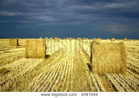 Bales Of Hay On The Agriculture Field