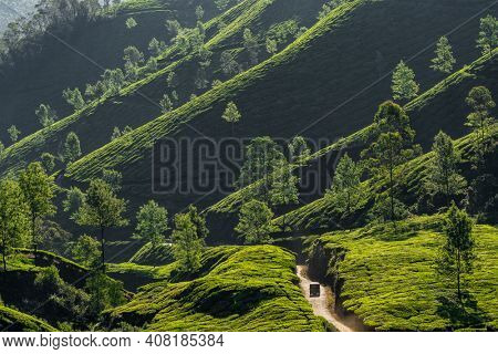 Beautiful tea plantations landscape with indian auto rickshaw driving through in Munnar, India