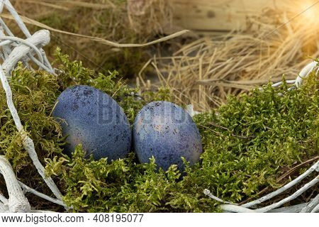 Colorful Easter Eggs On Green Moss. Happy Easter Holiday Concept.