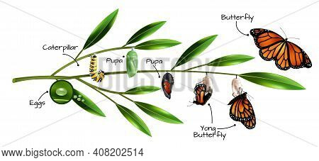 Butterfly Metamorphosis On Example Of Danainae Monarch Species Realistic Composition Vector Illustra
