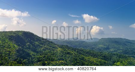 Mountains Covered With Wild Forest