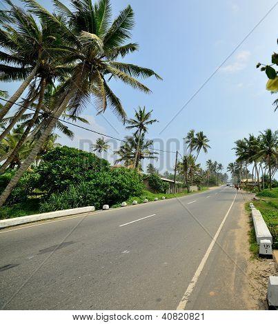 Road In The Tropics