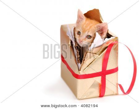 Bored Kitty In Present.
