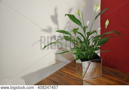 White Lily Flower With Green Foliage In Mirrored Glass Vase On Old Wooden Table, Vintage, With Backg