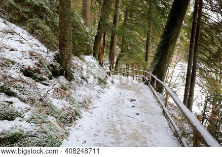 Winter landscape with pathway in forest