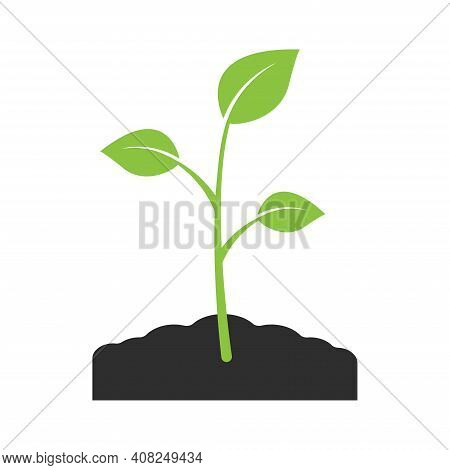 Green Growing Plant Sprout. Young Sprout With Leaves Vector Icon Isolated On White Background. Vecto