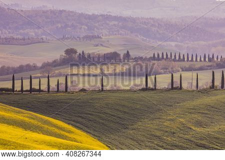 Yellow Flowers In The Field With Tuscan Village In The Background, Tuscany, Italy, April.