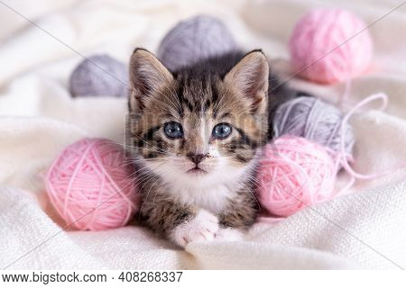 Striped Cat Playing With Pink And Grey Balls Skeins Of Thread On White Bed. Little Curious Kitten Ly