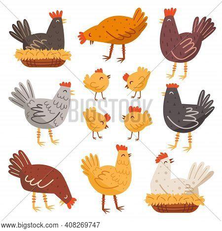 Hen, Bird, Cock, Chicken Set. Domestic Animals. Farm, Countryside Life. Eco Food Production. Illustr
