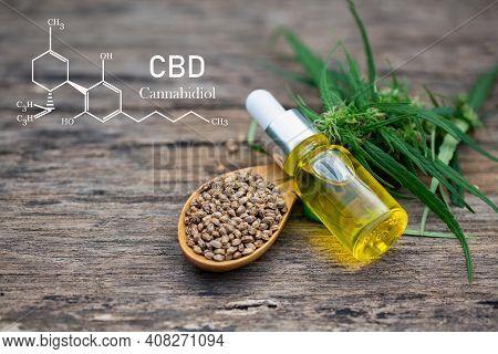 Hemp Plant Herbal Pharmaceutical Cbd Oil From A Jar. Concept Of Herbal Alternative Medicine, Cbd Oil