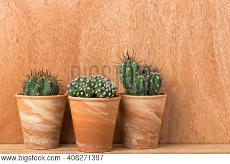 Three different cactus plants in terra cotta flower pots in front of wooden wall