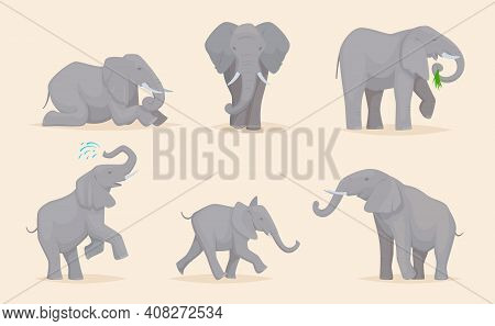 Elephant. Cute African Wild Animals Large Strong Savannah Elephants In Various Poses Exact Vector Il