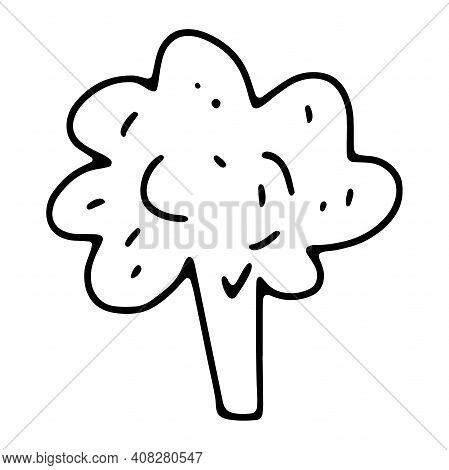 Doodle Broccoli. Outline Broccoli Isolated On White Background. Hand-drawn Fresh Vegetables. The Sym