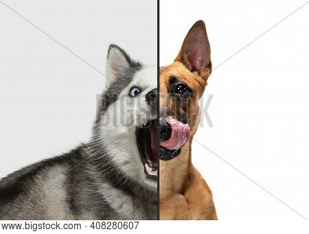 Excited, Playful And Waiting Puppies. Fun And Creative Combination Of Portraits Of Young Dogs With D