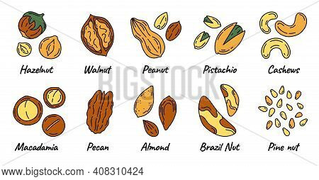Nuts And Seeds Set With Different Kinds Icons In Doodle Style. Walnuts, Macadamia, Hazelnuts And Pea