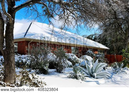 Agave Under Snow. Winter Storm In Texas.