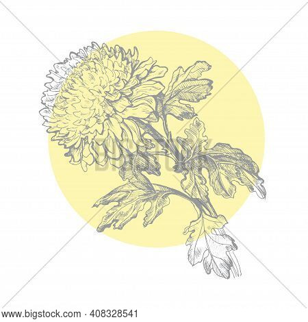 Hand Drawn Outline Chrysanthemum Flower And Leaves On Yellow Circle Form Isolated On White. Vector M