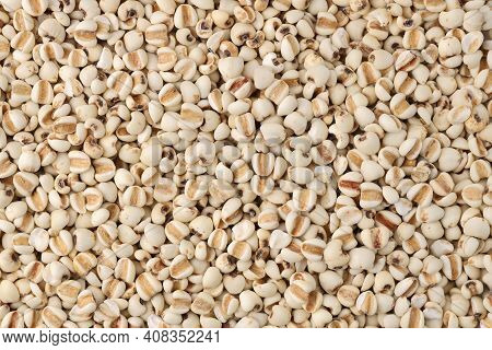 Close Up Top View Job's Tear (adlay Millet Or Pearl Millet) Background