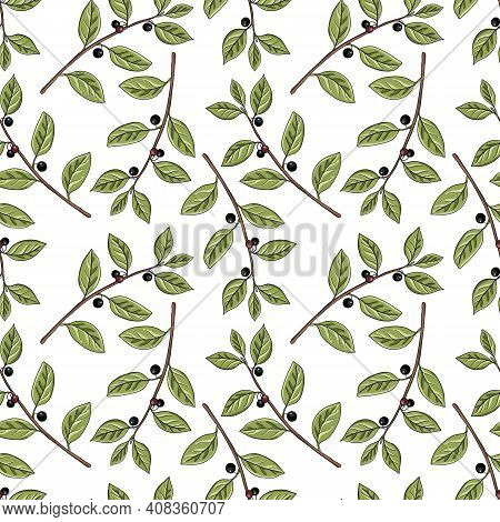 Vector Seamless Pattern With Drawing Alder Buckthorn Branch With Leaves And Berries , Frangula Alnus
