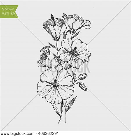 Flax Flower And Seed Vector Superfood Drawing. Isolated Hand Drawn Illustration On White Background.