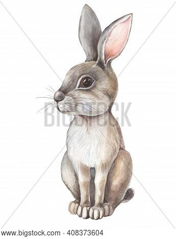 Watercolor Gray Hare On White Background. Isolated Of Grey Rabbit.cute Cartoon Character. Watercolou