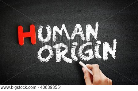 Hand Writing Human Origin On Blackboard, Concept Background