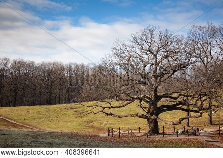 Lonely old tree against sky. spring landscape with a lone tree at park