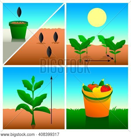 Planting Seeds, Diving Seedlings, Growing And Rich Harvest. Set Of Icon For Package With Seeds. Vect