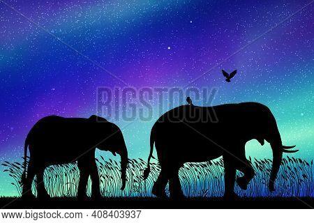 Elephant Family Walking At Night. Animal Silhouettes. Aurora Borealis