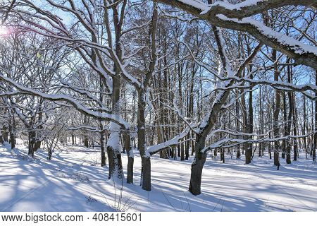 Bright Wintry Landscape In A Snow Covered Forest