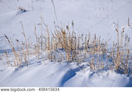 Sunlit Reeds In A Snow Covered Landscape