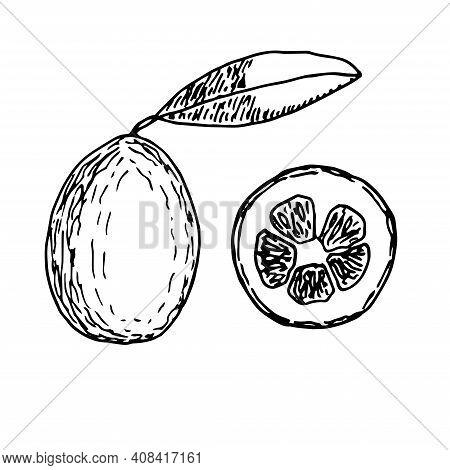 Set Of Kumquat Vector Illustration Hand Drawn Sketch